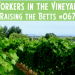 Workers in the Vineyard
