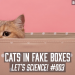 Cats in Fake Boxes